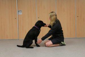 Como ensinar o cachorro dar pata
