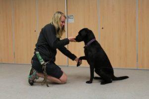 Como ensinar o cachorro dar pata2