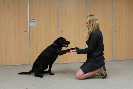 Como ensinar o cachorro dar pata3
