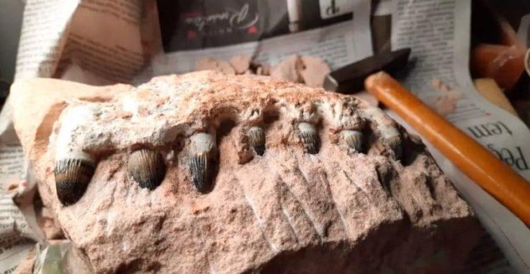 Fósseis de Dinossauros em São Paulo! A descobertas na Rodovia